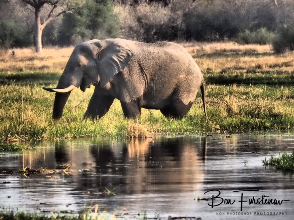 Early afternoon reflections, Moremi National Park, Botswana