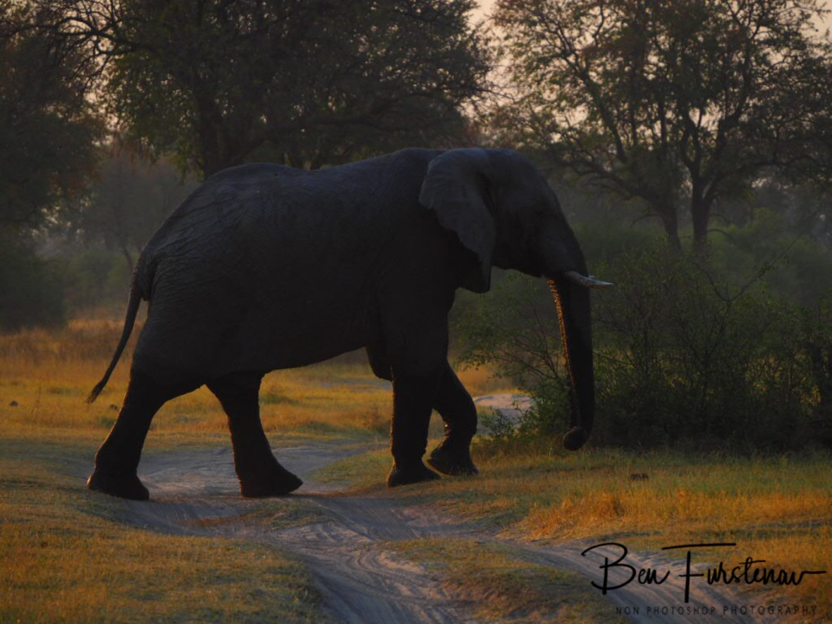 Elephant crossing, Moremi National Park, Botswana