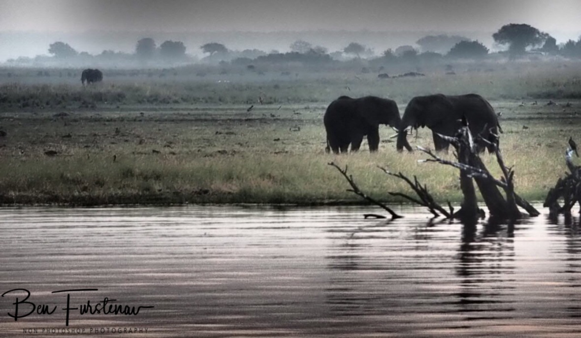 Gentle touch in Namibia, Chobe River