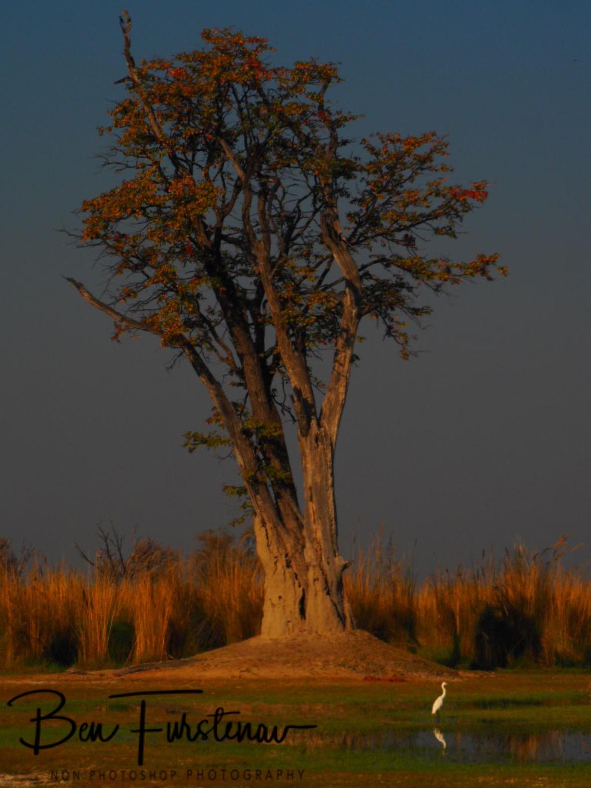 Last outpost before the swamp, paradise pools, Moremi National Park, Okavango Delta, Botswana