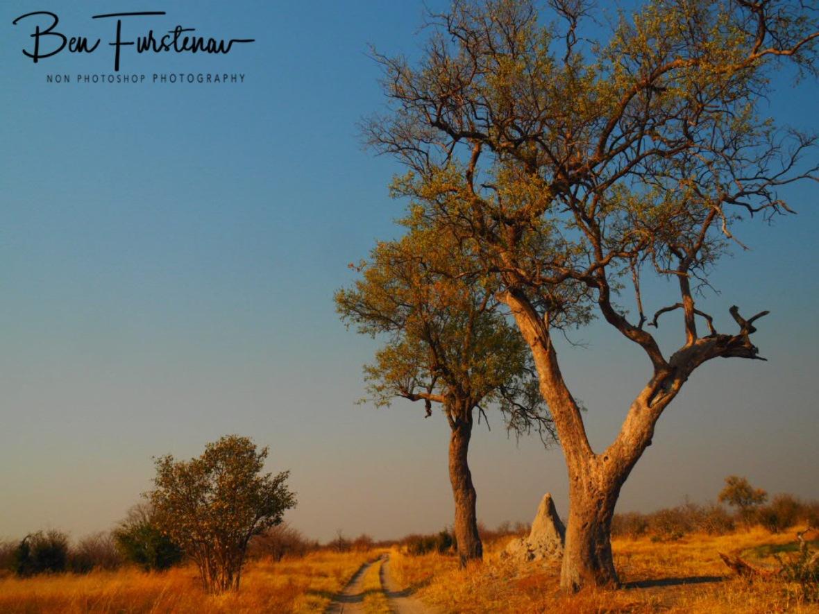 Spectacular Kalahari scenes, Chobe National Park, Okavango Delta, Botswana