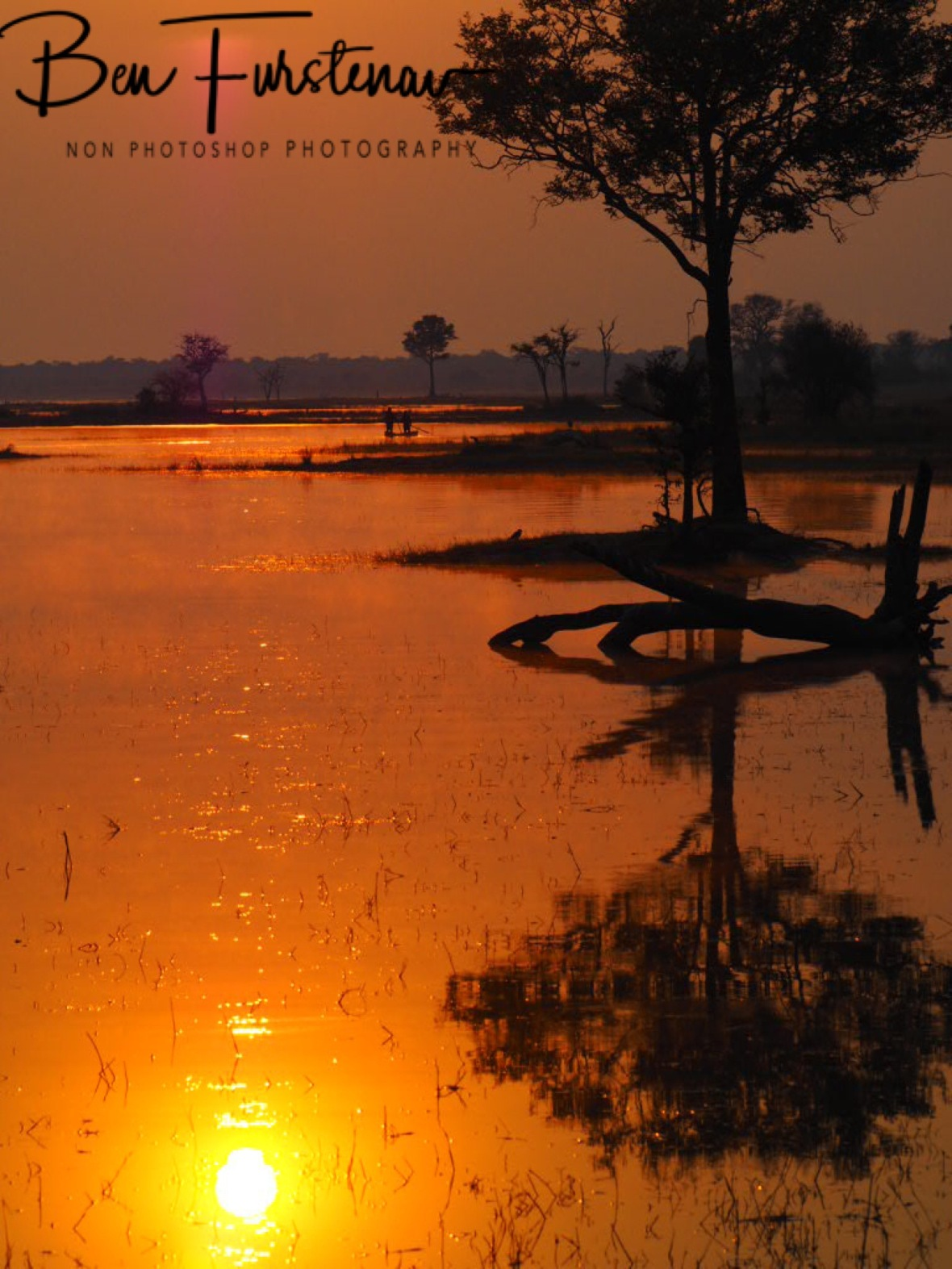 Tree reflections, Kafue National Park, Zambia