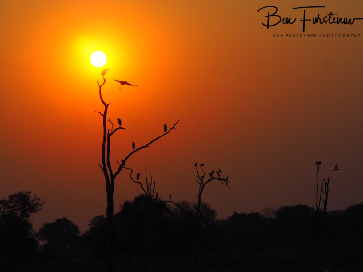 Sunrise birdlife, Kafue National Park, Zambia