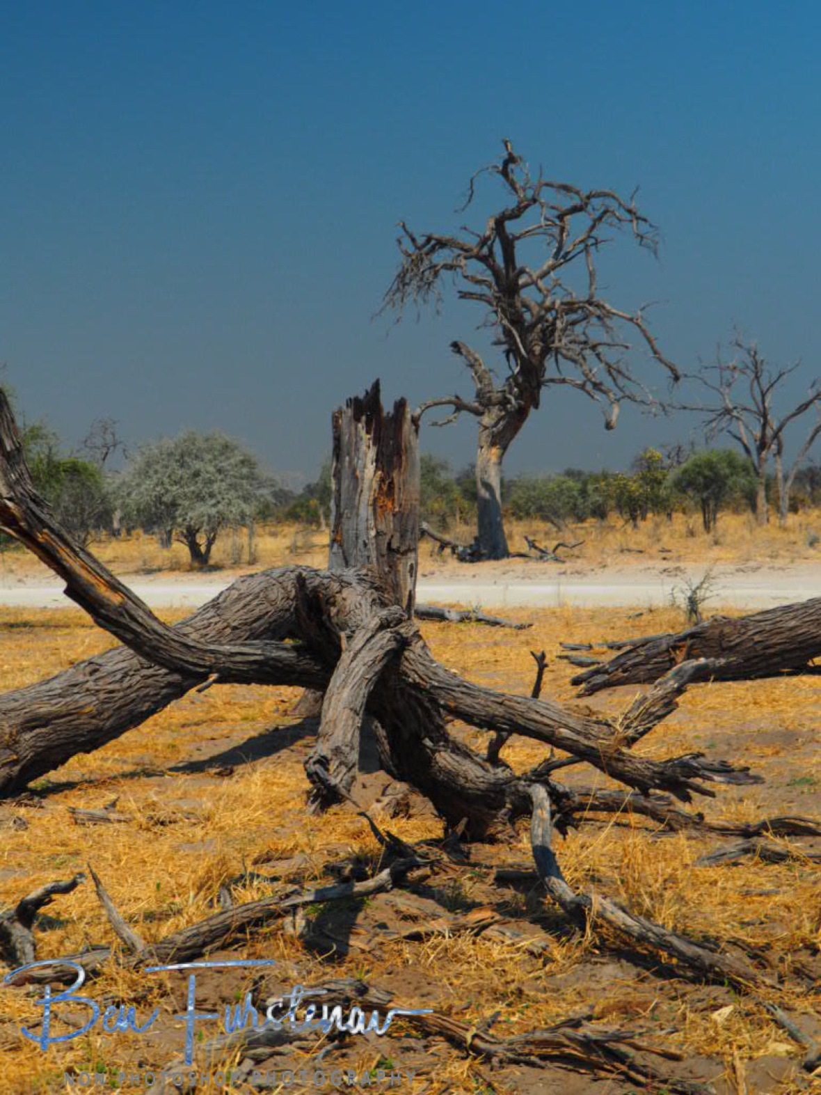 Dry and arid landscape in Moremi National Park, Okavango Delta, Botswana