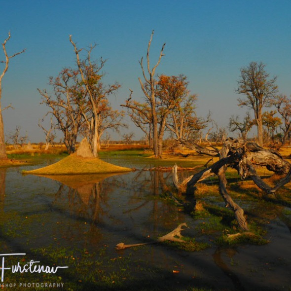 Paradise pools, Moremi National Park, Okavango, Botswana