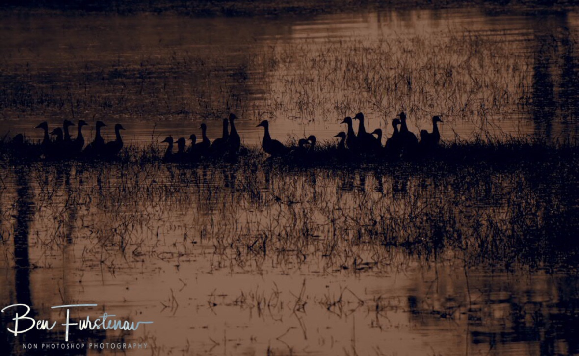 Early morning gathering, Kafue National Park, Zambia