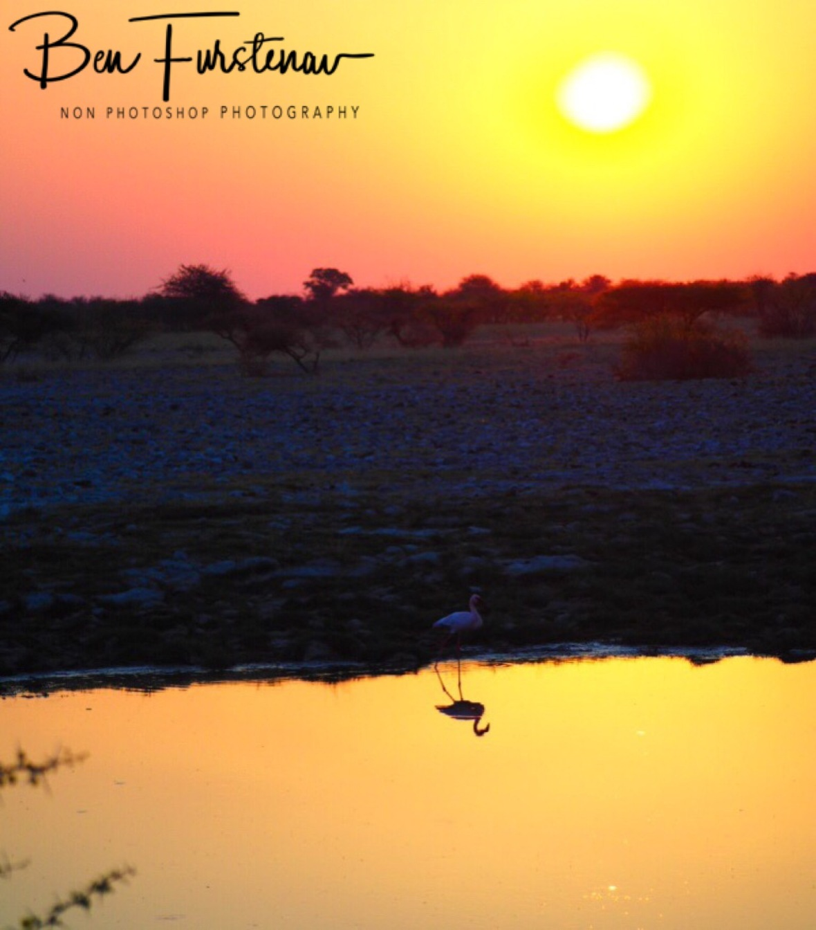 Flamingo sunset, Makgadikgadi Salt Pans, Botswana