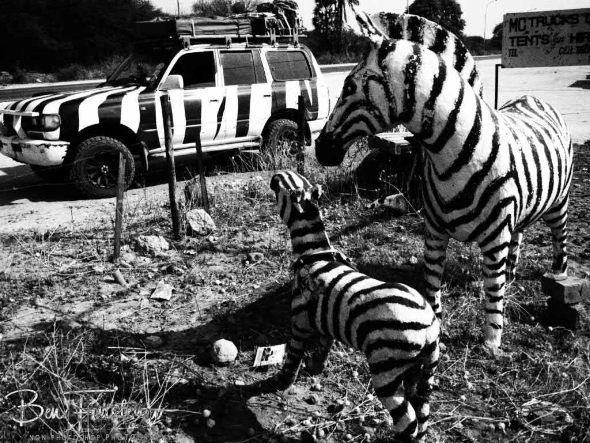 Even zebra statues have a peculiar look, Botswana