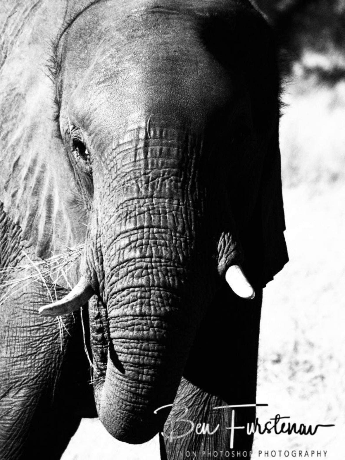 Munching, Chobe National Park, Botswana