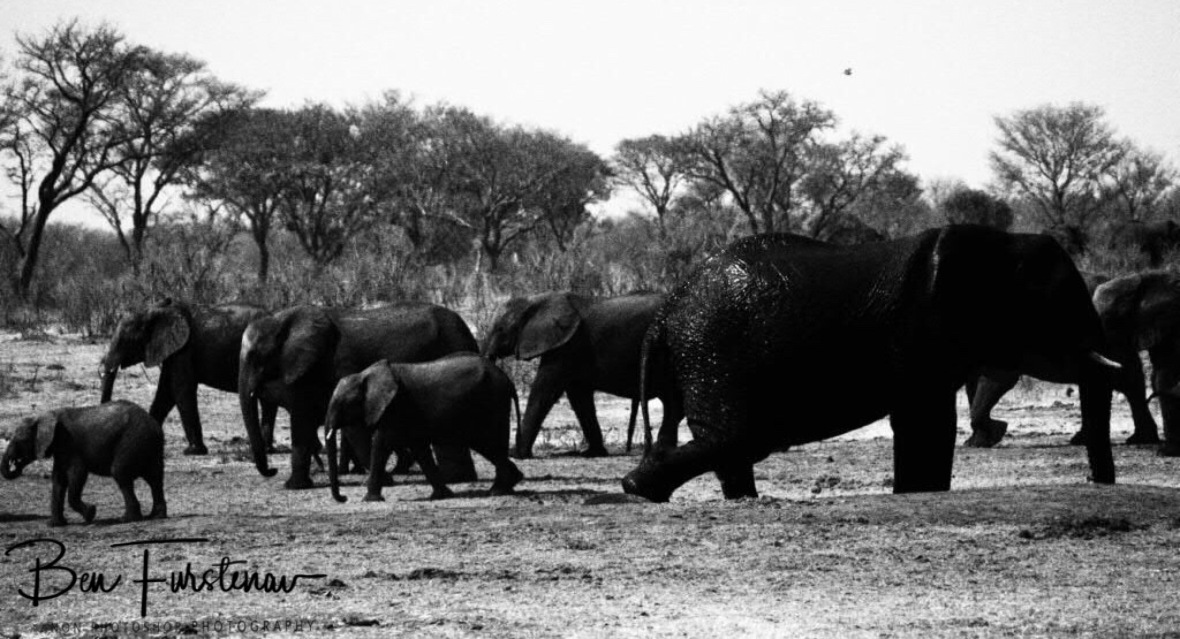 Elephants to the left, right and centre, Khaudum National Park, Namibia