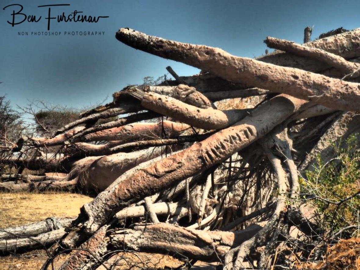 The last name engraved, Makgadikgadi Salt Pans, Botswana