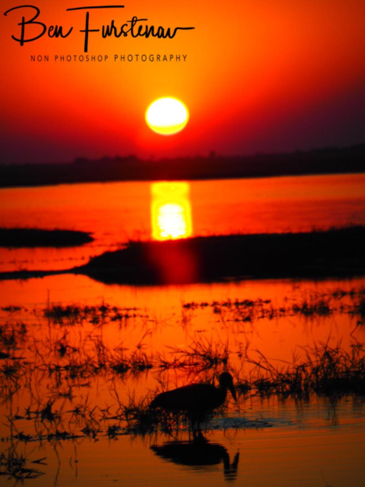Birdlife sunset, Chobe National Park, Botswana