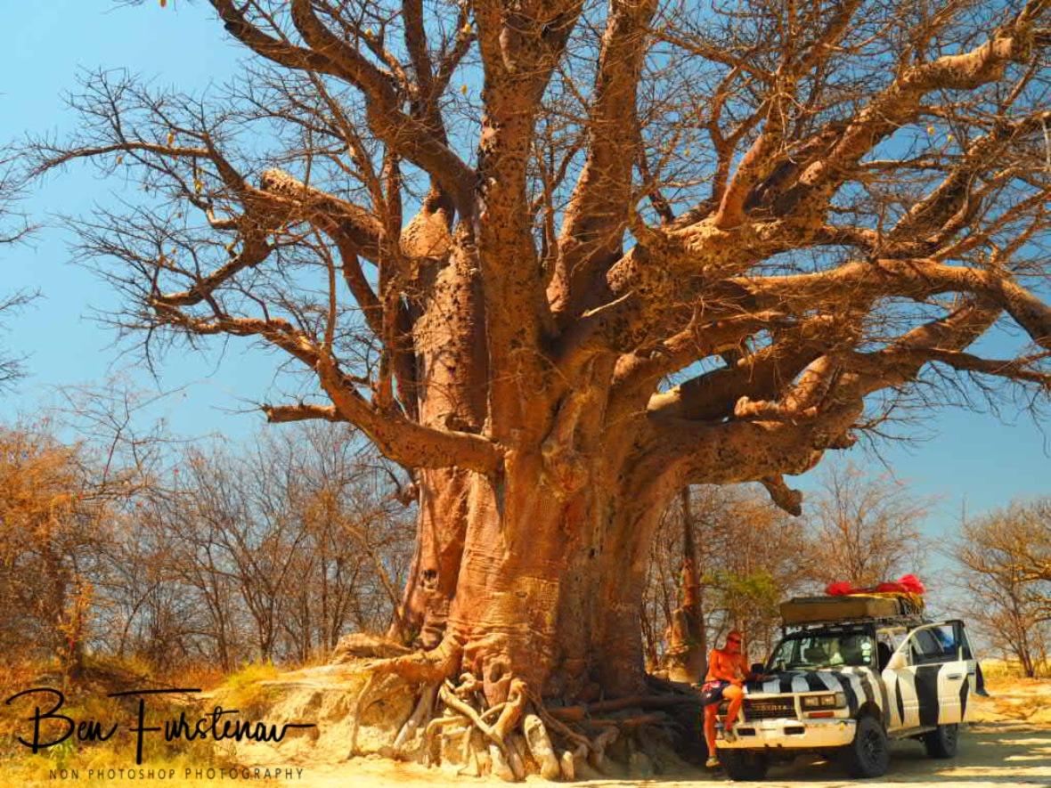 Shady spot from midday heat, Makgadikgadi Salt Pans, Botswana