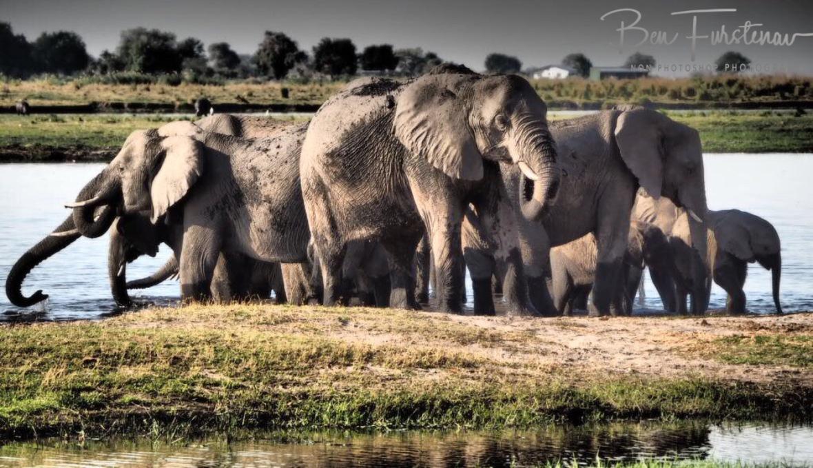 Keeping an eye out, Chobe National Park, Botswana