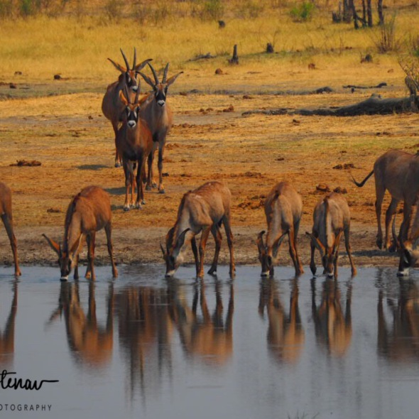 Waterhole is safe to drink, Khaudum National Park, Namibia