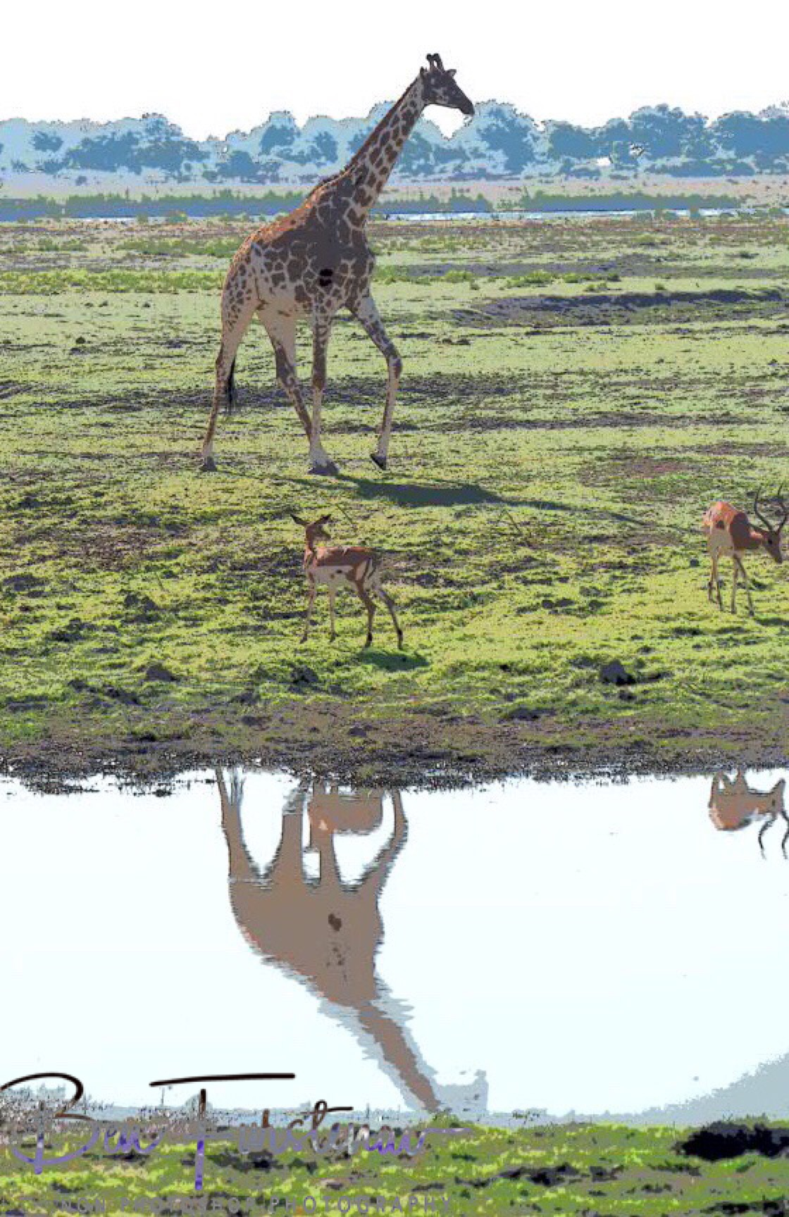 Giraffe and Impala reflections , Chobe National Park, Botswana