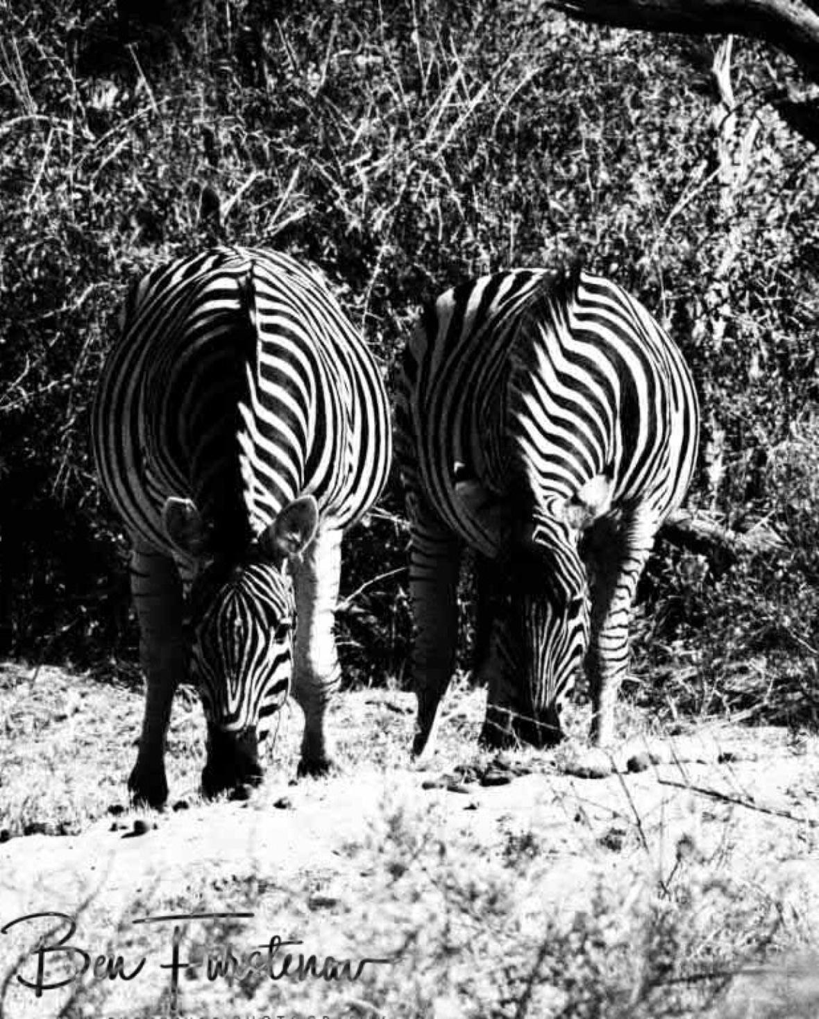 Mirror image, Makgadikgadi National Park, Botswana