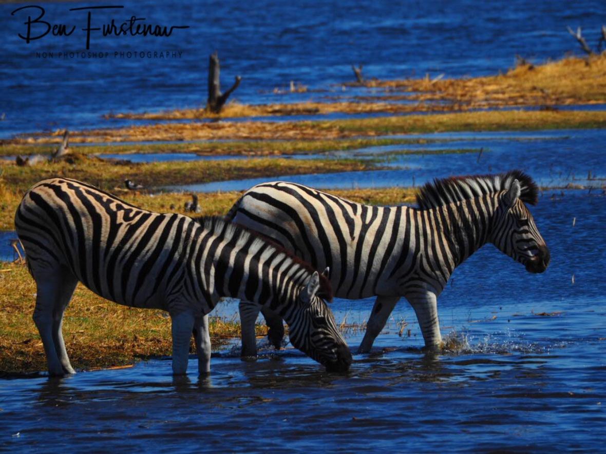 Water casualties, Makgadikgadi National Park, Botswana