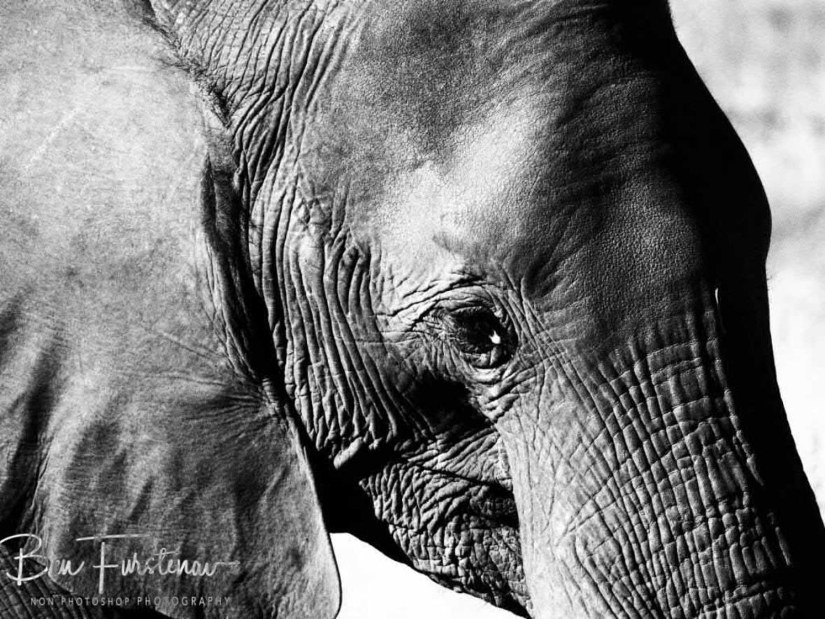 Teardrop?, Chobe National Park, Botswana