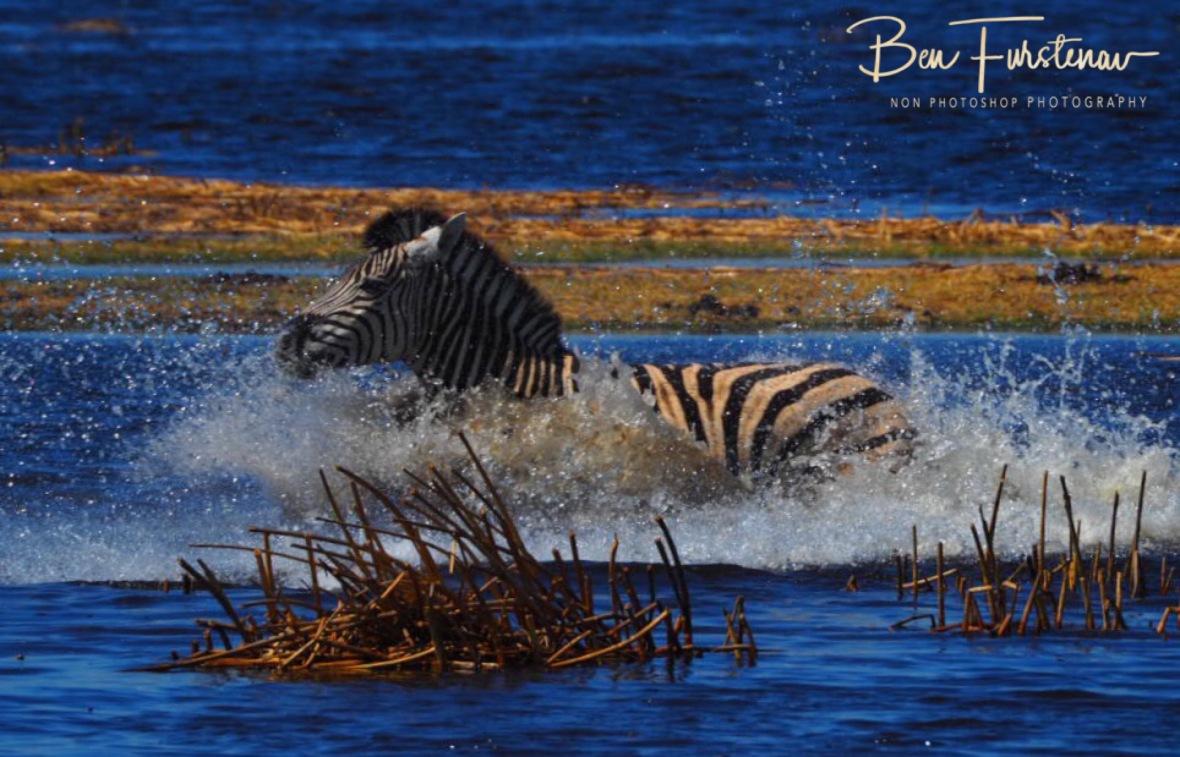 Splish splash, Makgadikgadi National Park, Botswana