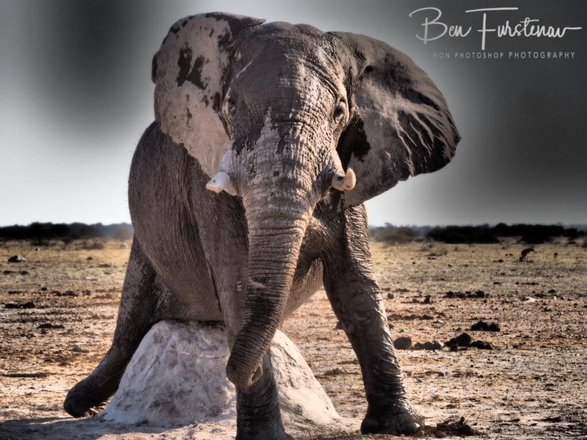 Classic, Nxai National Park, Botswana