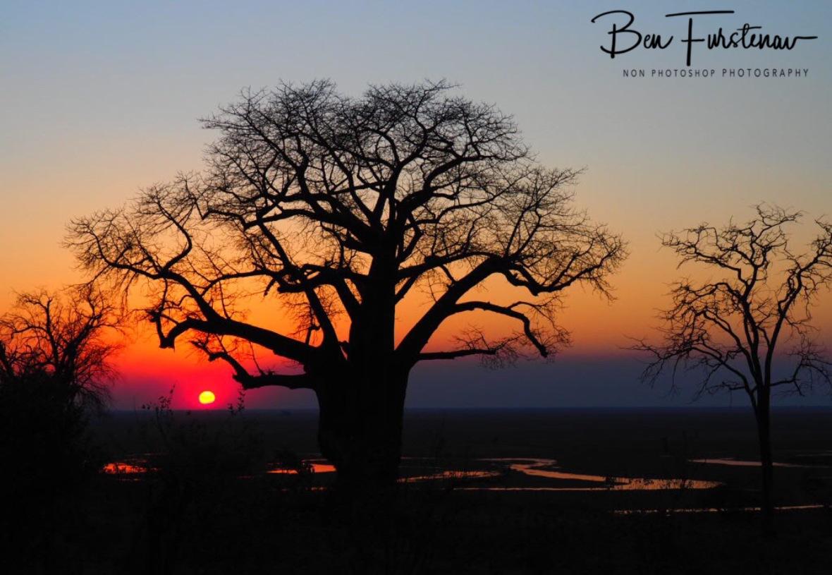 Vein off life, Okavango Delta, Botswana
