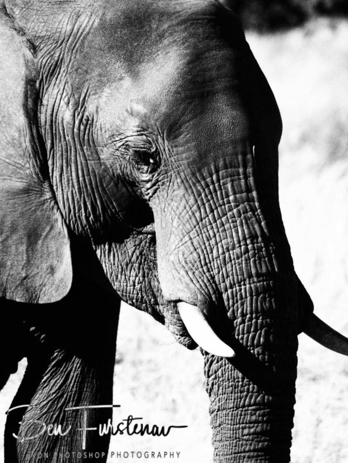 Detailed complexion, Chobe National Park, Botswana