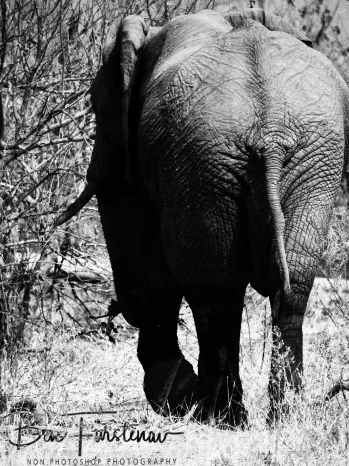 Moving back in to the jungle book, Moremi National Park, Botswana