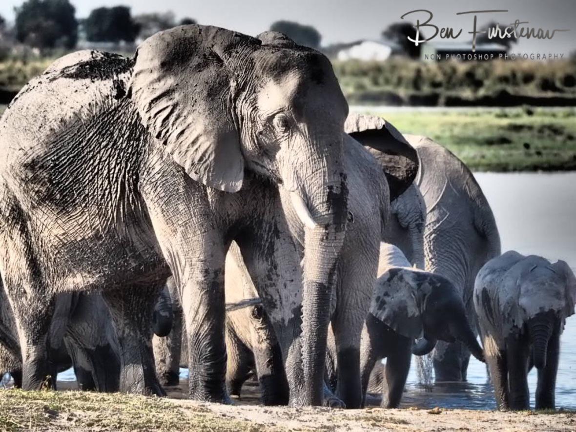 Worried mom, Chobe National Park, Botswana