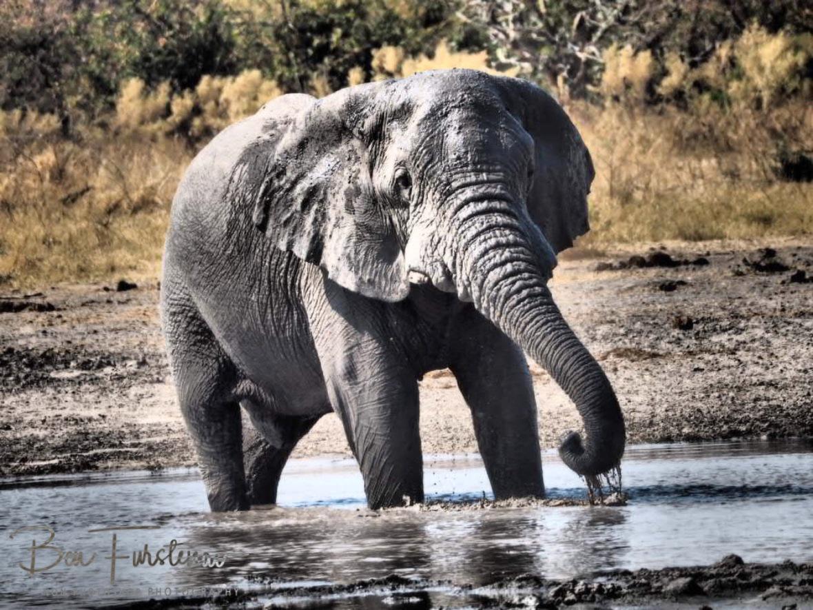 Dopy, Moremi National Park, Botswana