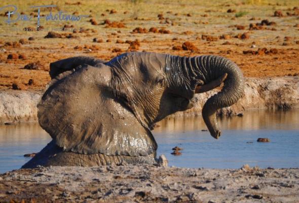A breather, Nxai National Park, Botswana