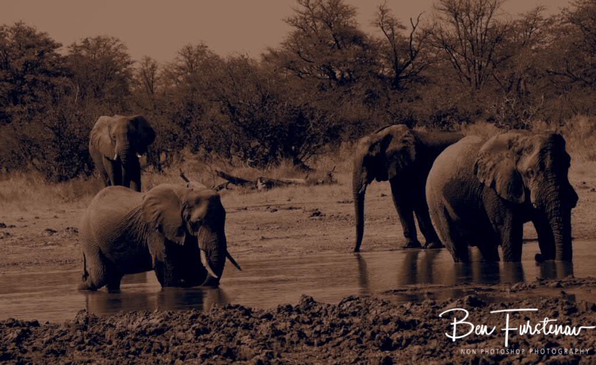 Elephants from the Junglebook, Moremi National Park, Botswana