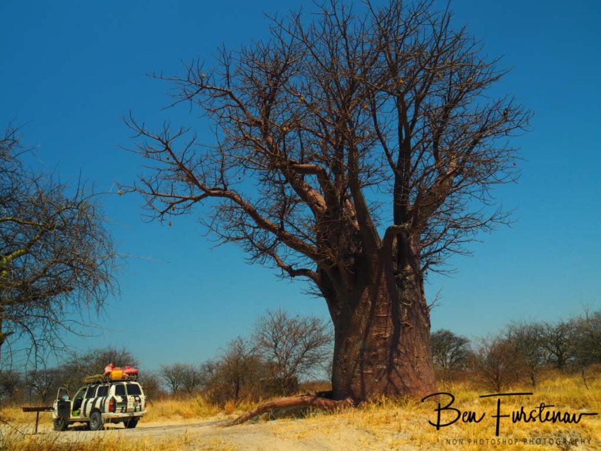 Makgadikgadi Salt Pans National Park Campground, Botswana