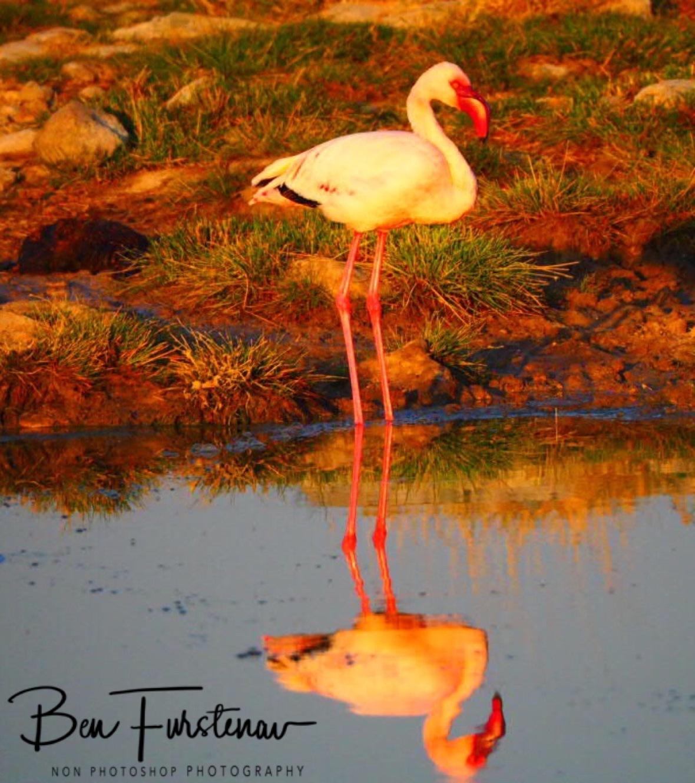 Farewell flamingo, Makgadikgadi Salt Pans, Botswana