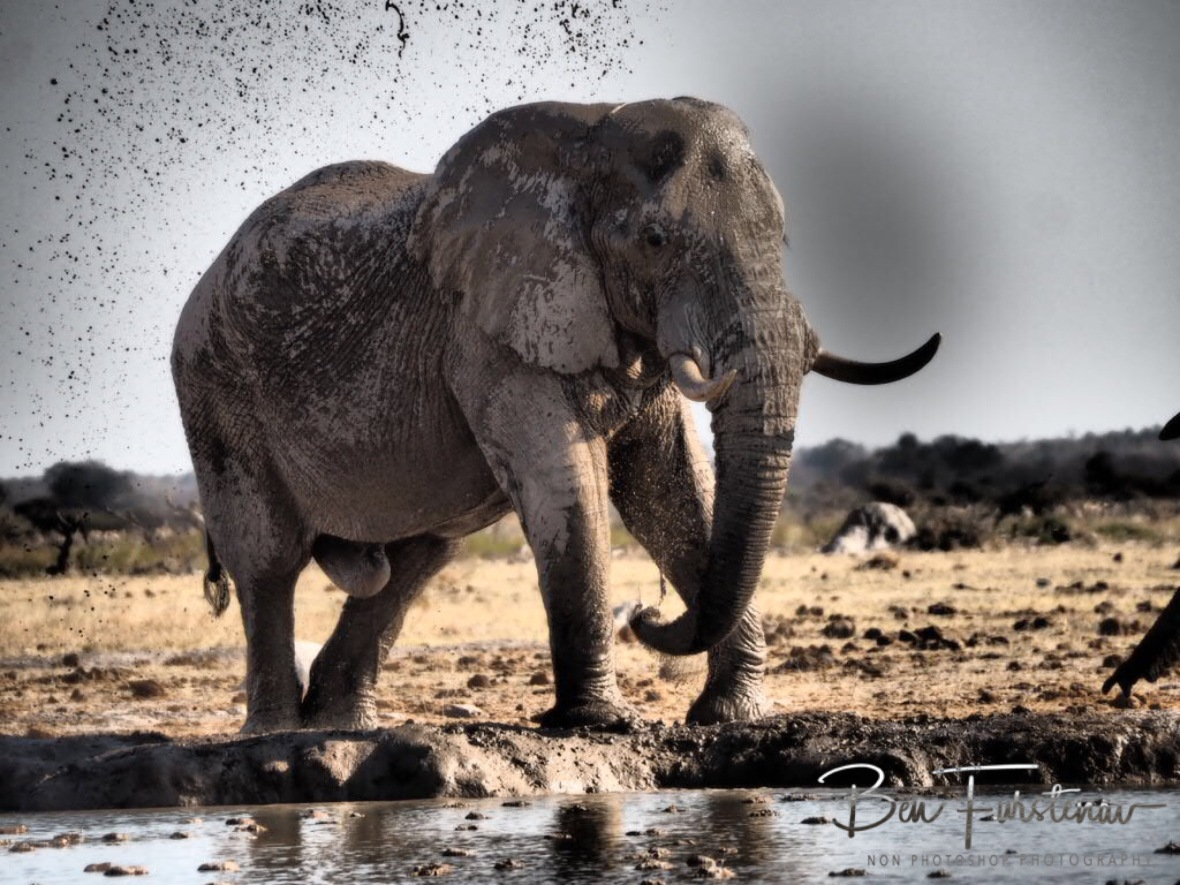 Nothing like a mud shower, Nxai National Park, Botswana