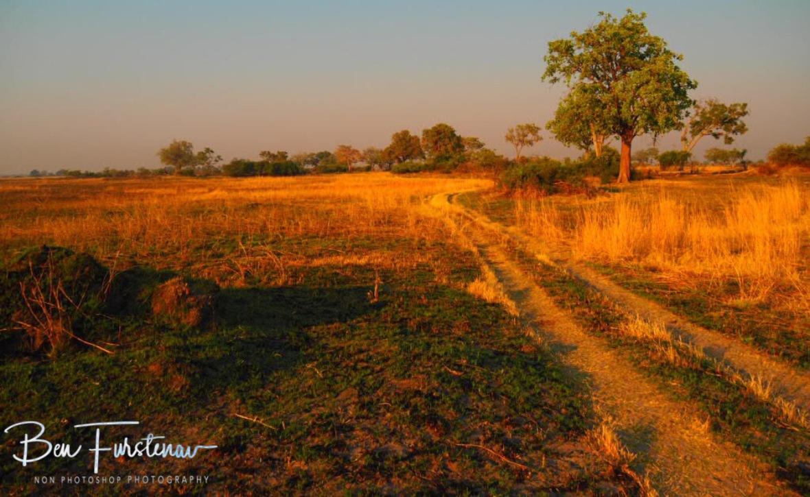 Perfect wildlife settings, Nkasa National Park, Namibia
