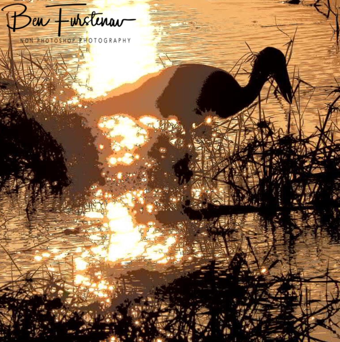 Open Billed Stork in paintings, Chobe National Park, Botswana