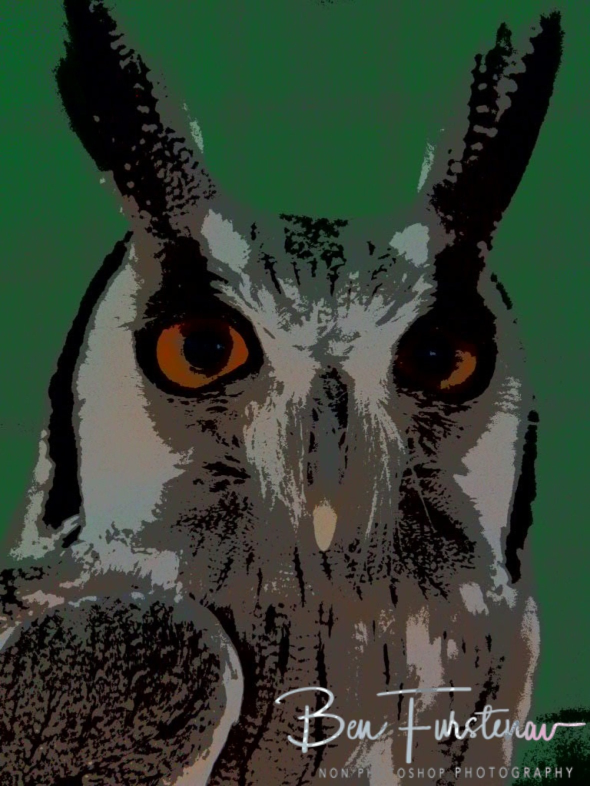 Owl closeup, CARACAL Wildlife centre, Kasane, Botswana