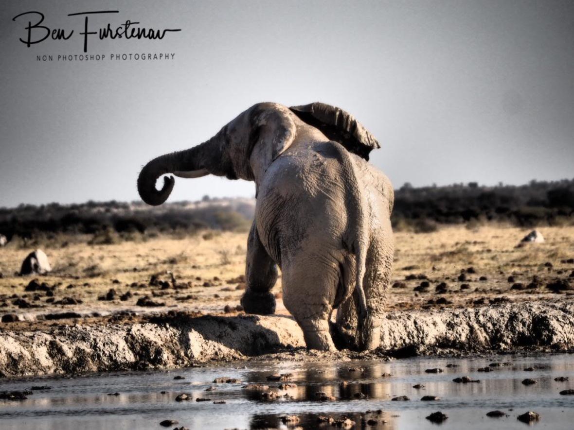 Unwanted departure, Nxai National Park, Botswana