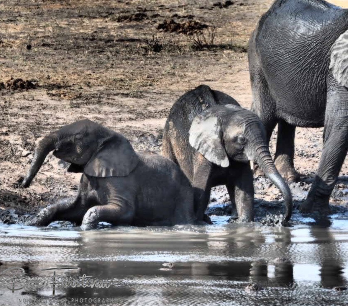 Youngsters enjoy the mud immensely, Khaudum National Park, Namibia