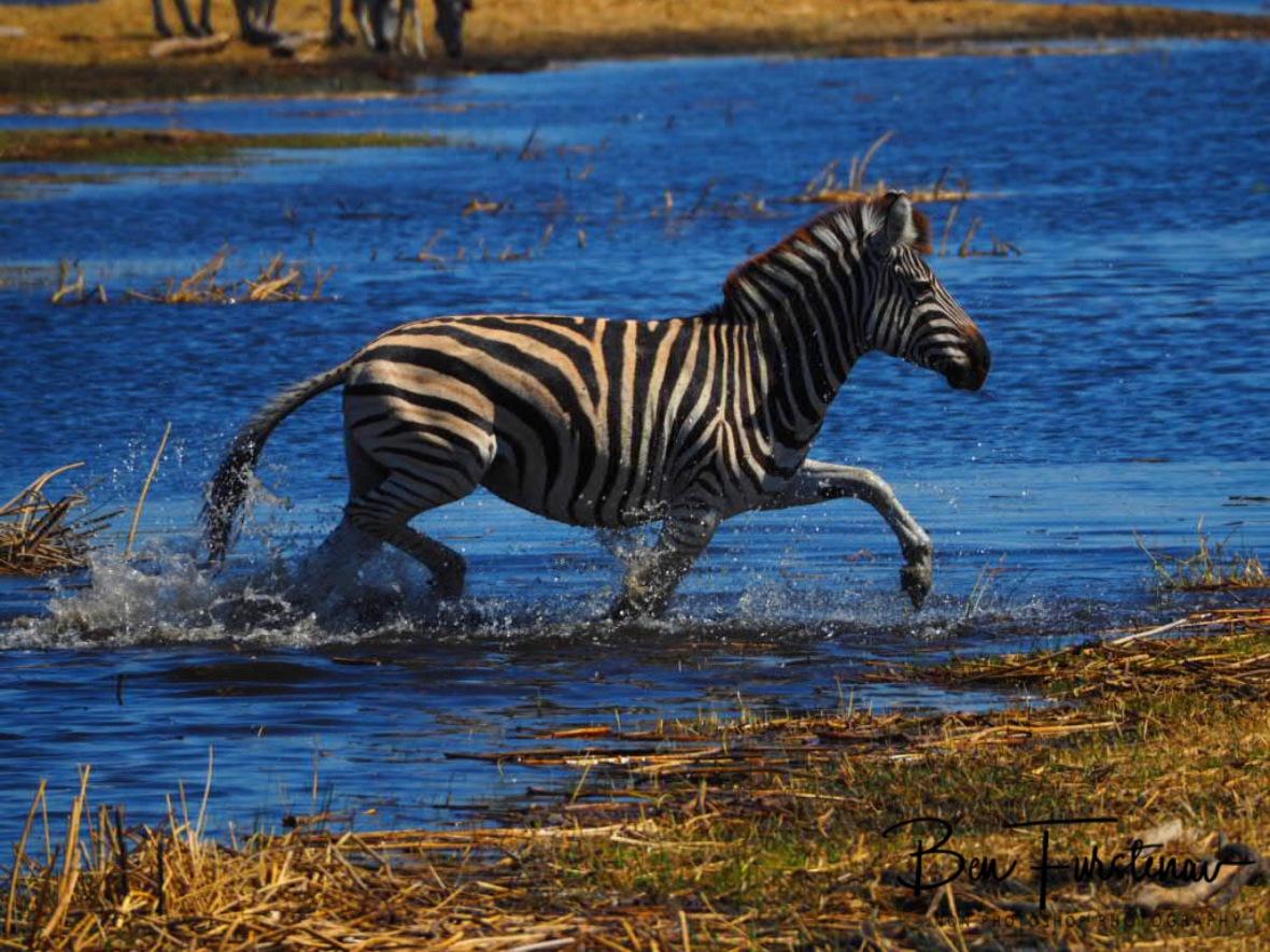 Bathing time, Makgadikgadi National Park, Botswana