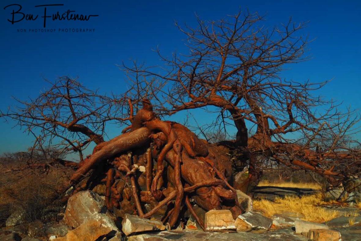 Amazing strength and determination, Kubu Island, Makgadikgadi Salt Pans, Botswana