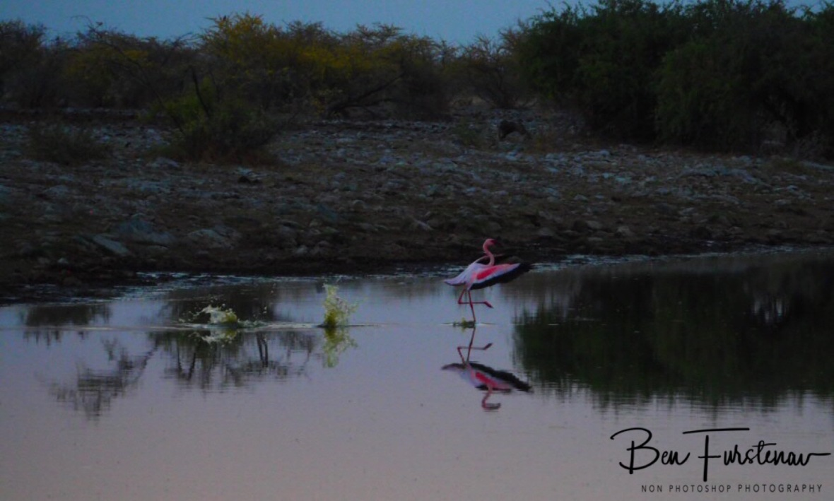 Curious landing, Makgadikgadi Salt Pans, Botswana