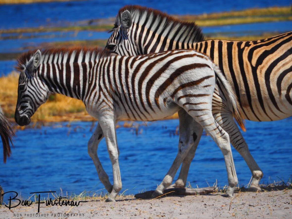 Exaggerating colours, Makgadikgadi National Park, Botswana