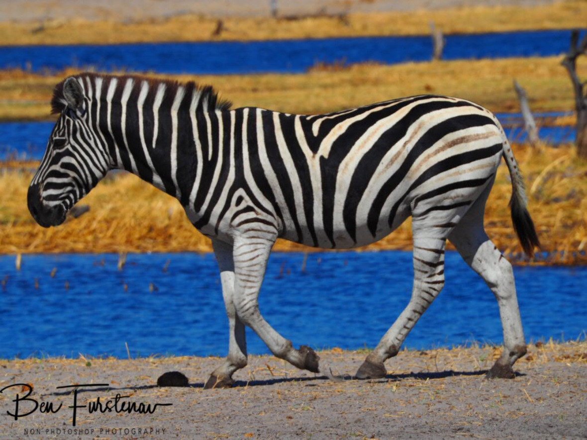 All colours, Makgadikgadi National Park, Botswana