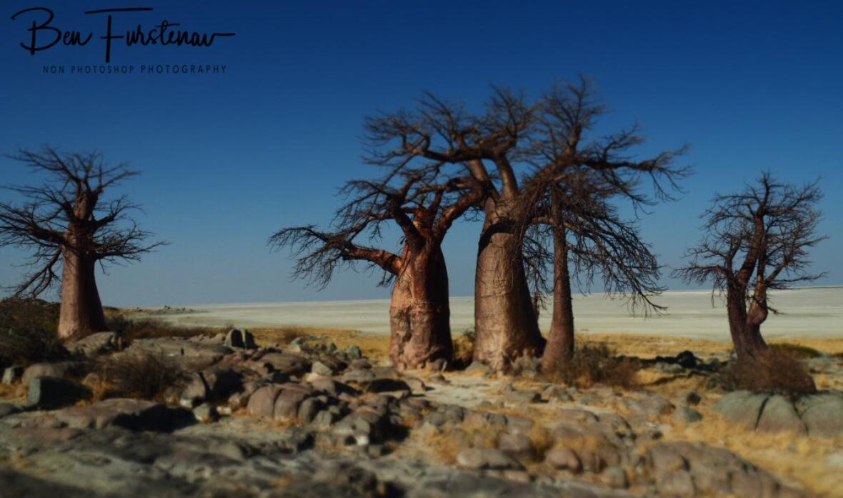A promising sunrise spot, Kubu Island, Makgadikgadi Salt Pans, Botswana