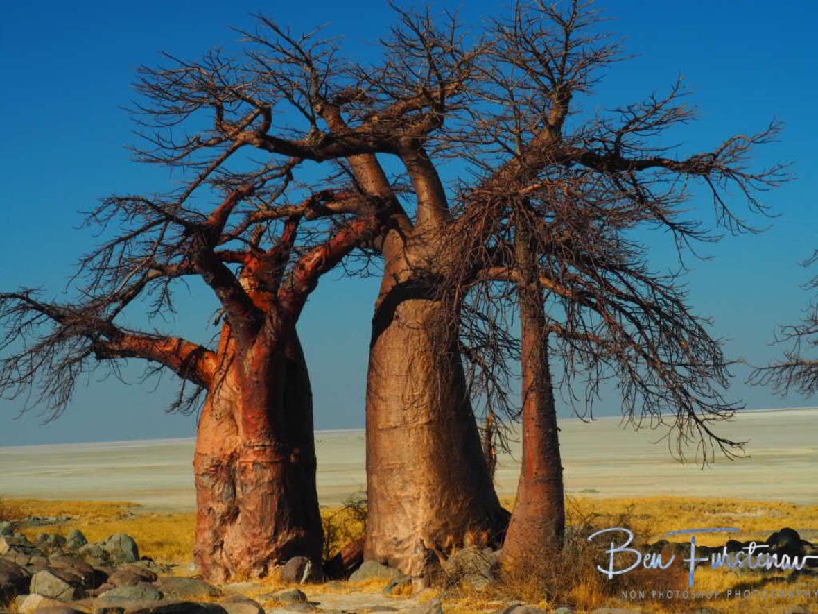 Family back view, Kubu Island, Makgadikgadi Salt Pans, Botswana