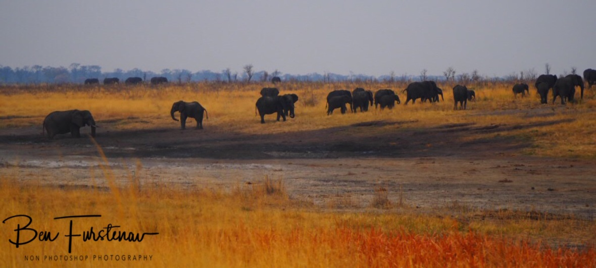 Elephants near and far, Khaudum National Park, Namibia