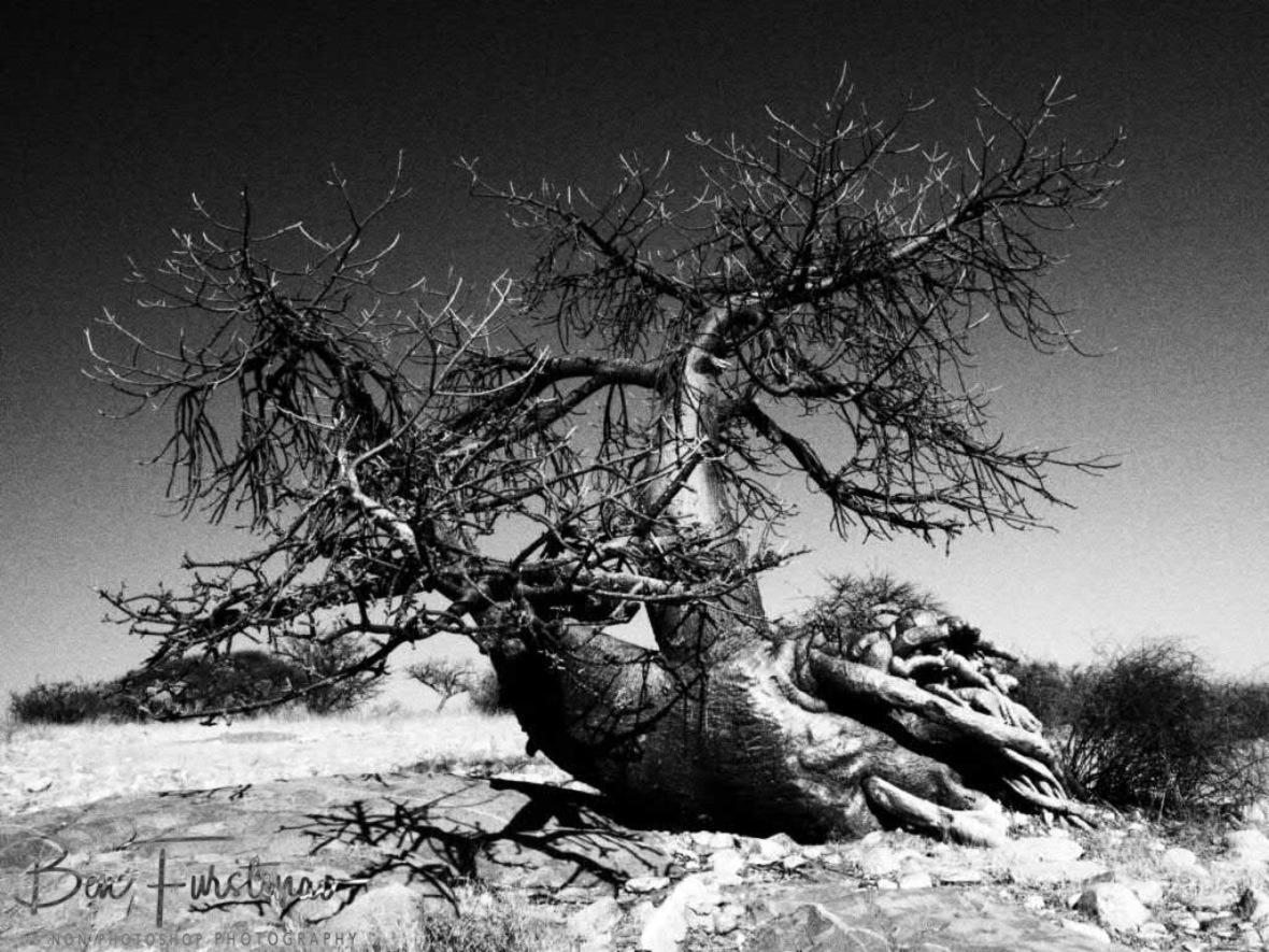 Ahoi Captain, , Kubu Island, Makgadikgadi Salt Pans, Botswana