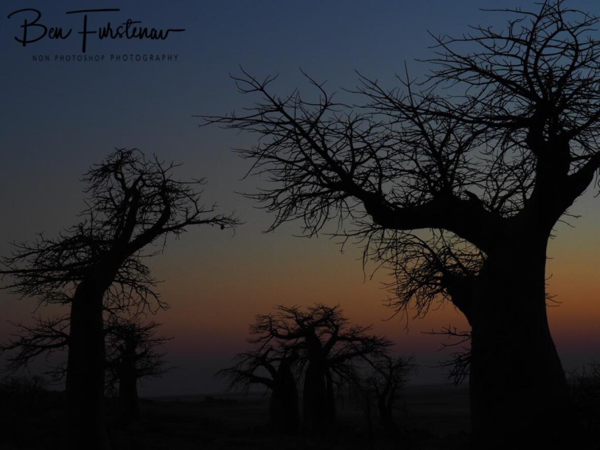Early morning colours on Kubu Island, Makgadikgadi Salt Pans, Botswana
